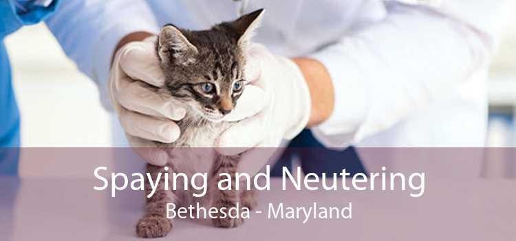Spaying and Neutering Bethesda - Maryland