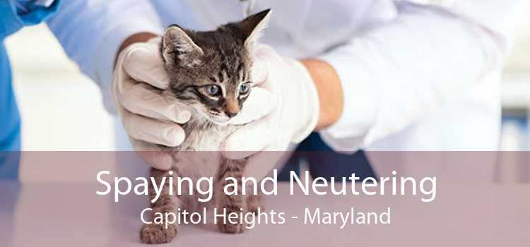 Spaying and Neutering Capitol Heights - Maryland