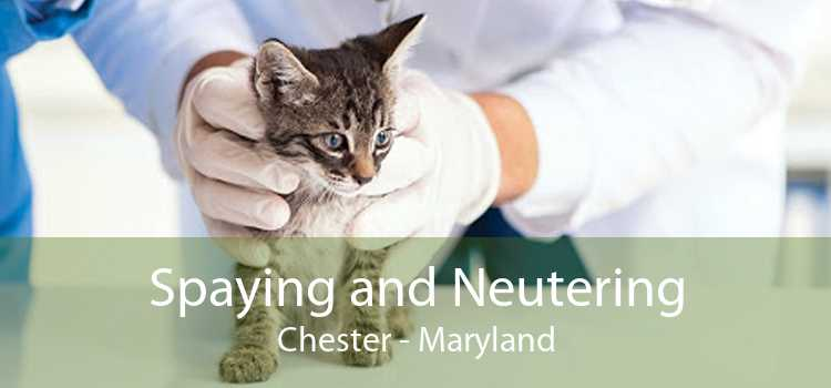 Spaying and Neutering Chester - Maryland