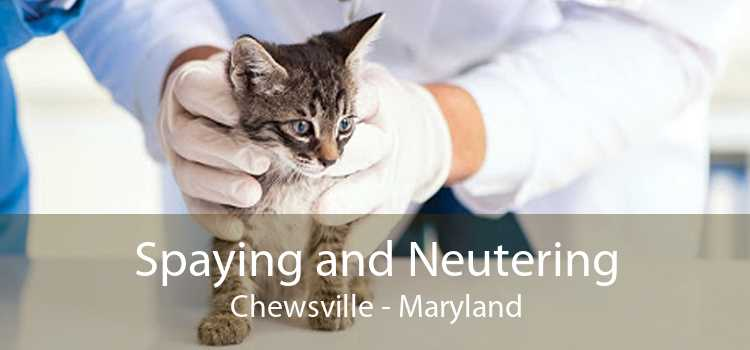 Spaying and Neutering Chewsville - Maryland