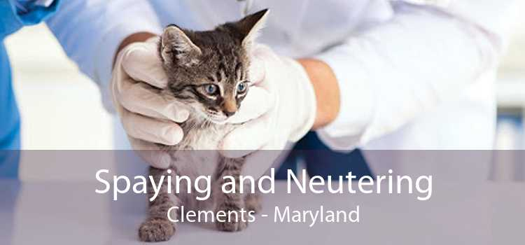Spaying and Neutering Clements - Maryland