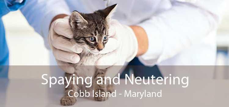 Spaying and Neutering Cobb Island - Maryland