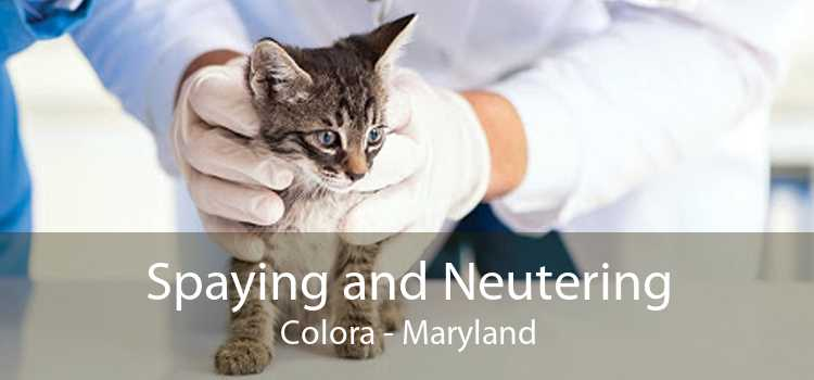 Spaying and Neutering Colora - Maryland