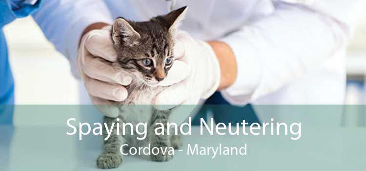 Spaying and Neutering Cordova - Maryland