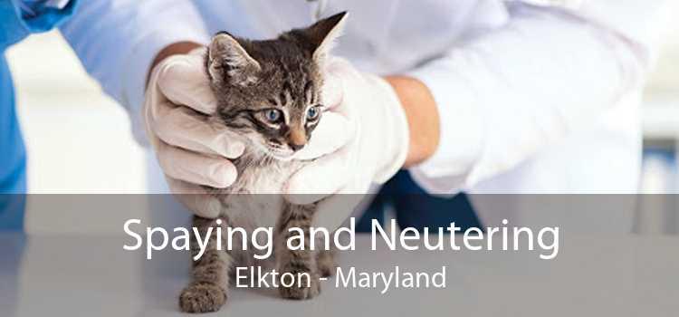 Spaying and Neutering Elkton - Maryland