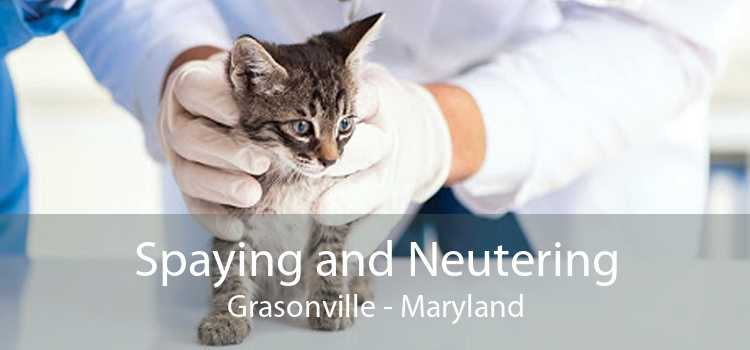 Spaying and Neutering Grasonville - Maryland