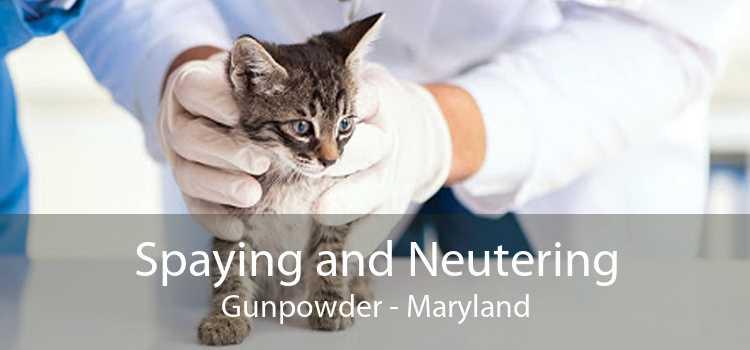 Spaying and Neutering Gunpowder - Maryland