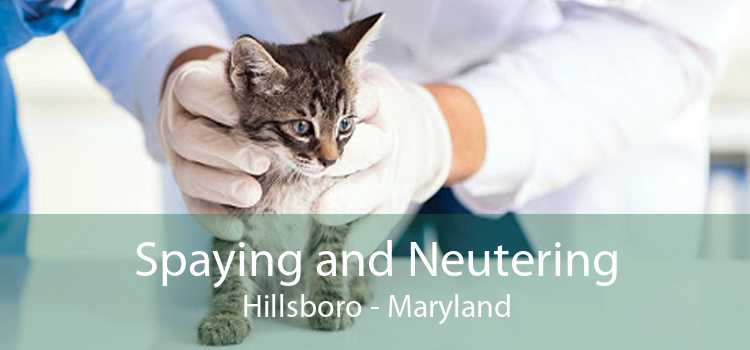 Spaying and Neutering Hillsboro - Maryland