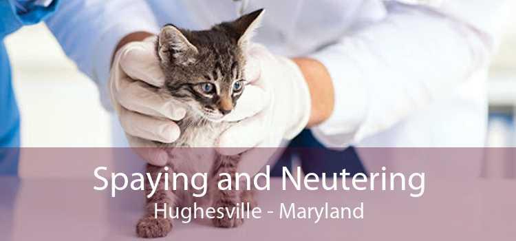Spaying and Neutering Hughesville - Maryland