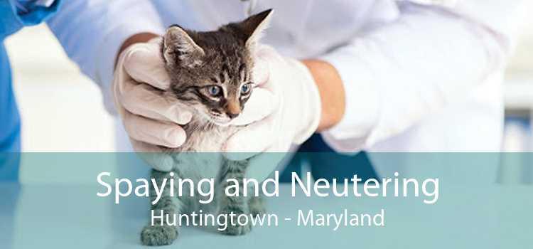 Spaying and Neutering Huntingtown - Maryland