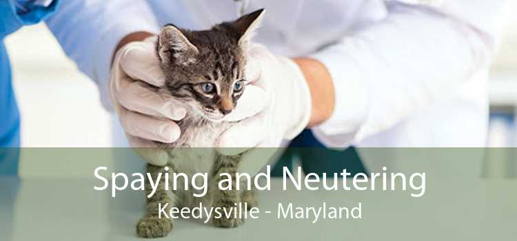 Spaying and Neutering Keedysville - Maryland