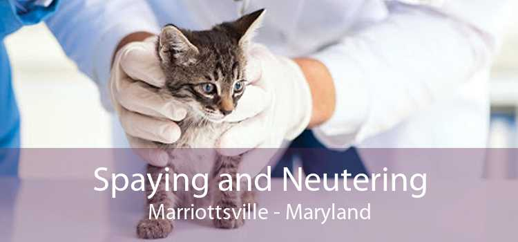 Spaying and Neutering Marriottsville - Maryland