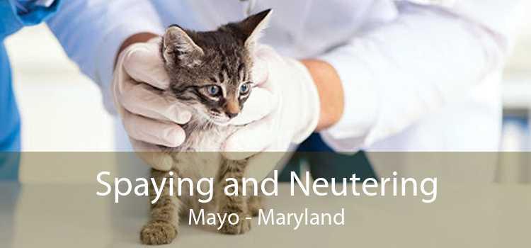 Spaying and Neutering Mayo - Maryland