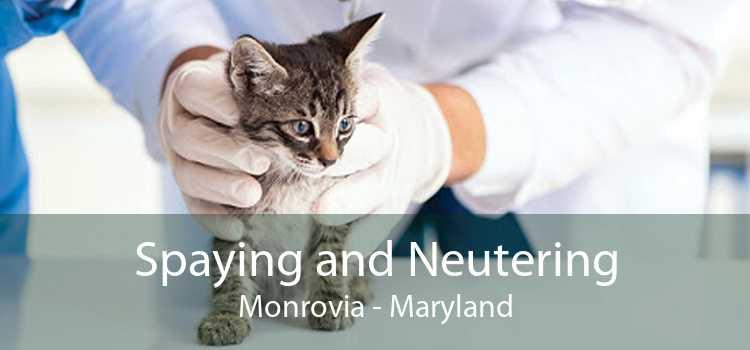 Spaying and Neutering Monrovia - Maryland