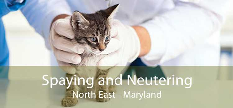 Spaying and Neutering North East - Maryland