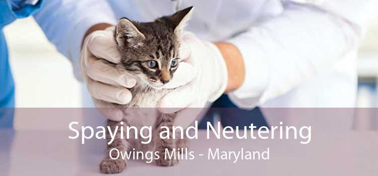 Spaying and Neutering Owings Mills - Maryland