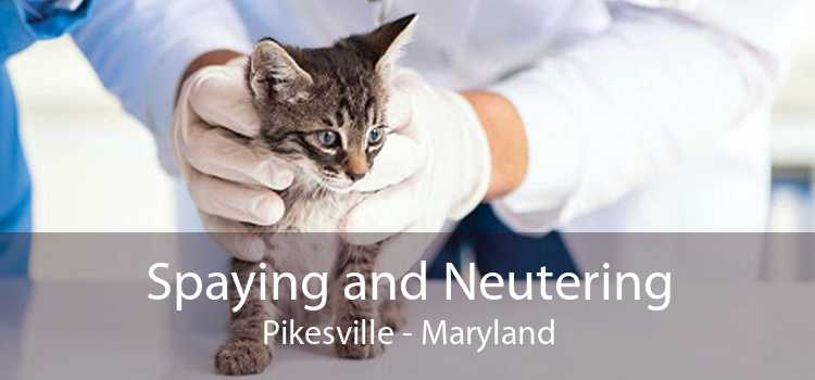 Spaying and Neutering Pikesville - Maryland