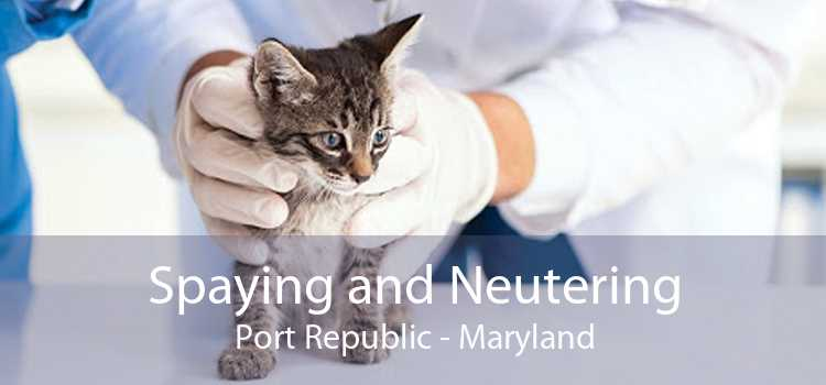 Spaying and Neutering Port Republic - Maryland