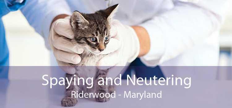 Spaying and Neutering Riderwood - Maryland