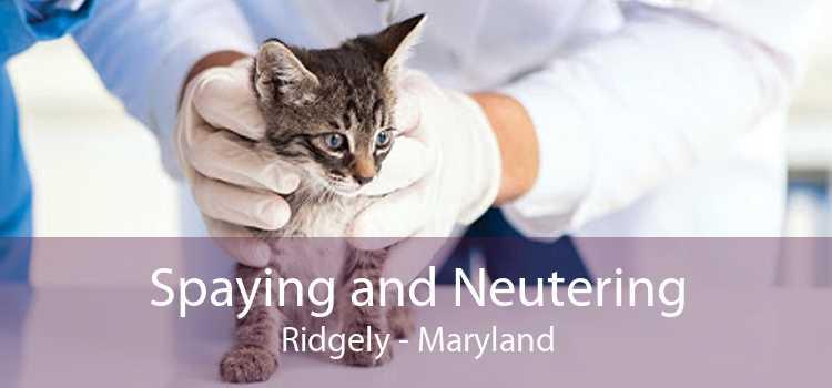 Spaying and Neutering Ridgely - Maryland