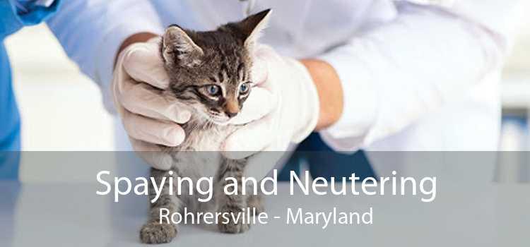Spaying and Neutering Rohrersville - Maryland