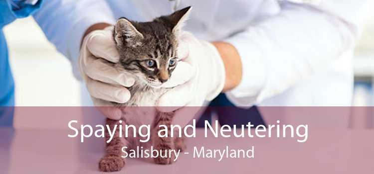 Spaying and Neutering Salisbury - Maryland