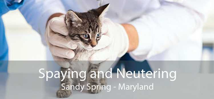 Spaying and Neutering Sandy Spring - Maryland