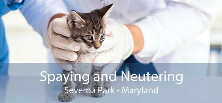 Spaying and Neutering Severna Park - Maryland