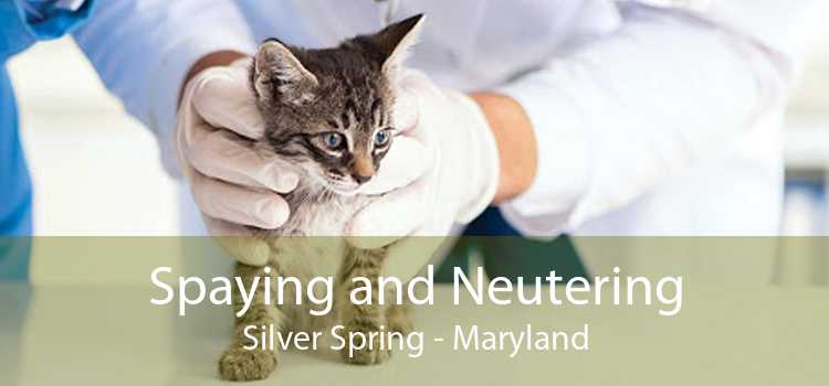 Spaying and Neutering Silver Spring - Maryland
