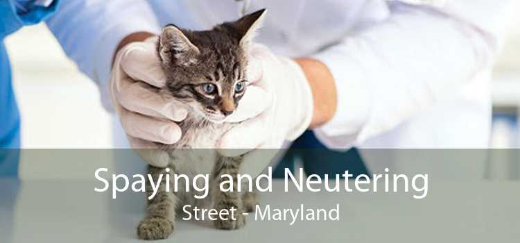Spaying and Neutering Street - Maryland