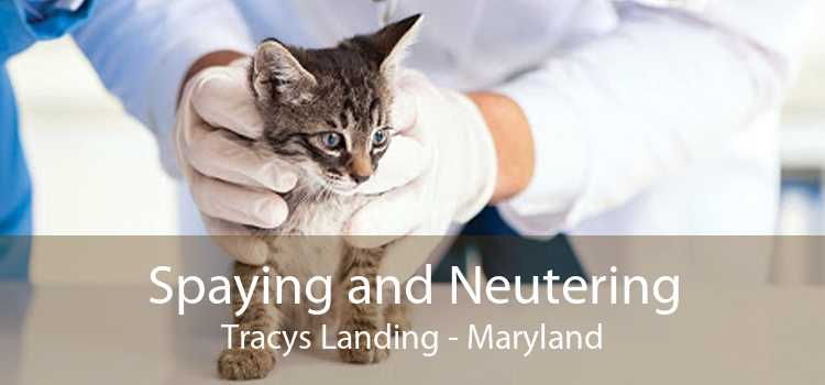Spaying and Neutering Tracys Landing - Maryland