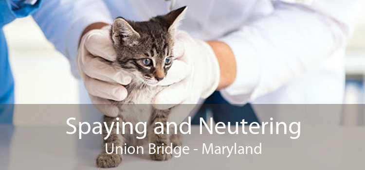Spaying and Neutering Union Bridge - Maryland