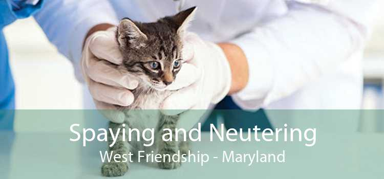 Spaying and Neutering West Friendship - Maryland