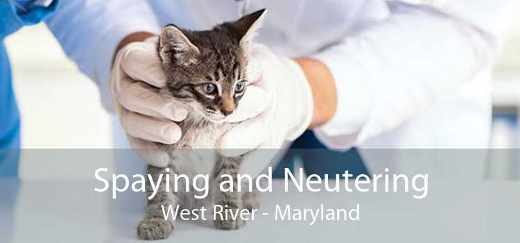 Spaying and Neutering West River - Maryland