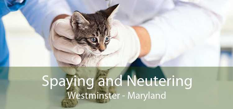 Spaying and Neutering Westminster - Maryland