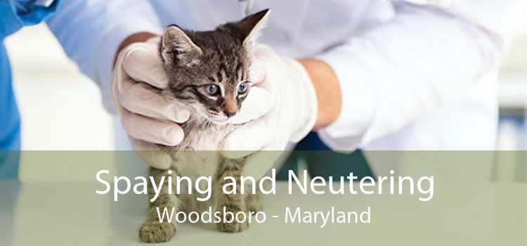 Spaying and Neutering Woodsboro - Maryland