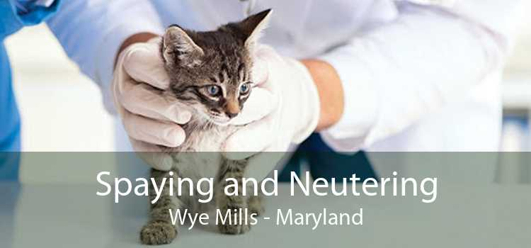 Spaying and Neutering Wye Mills - Maryland