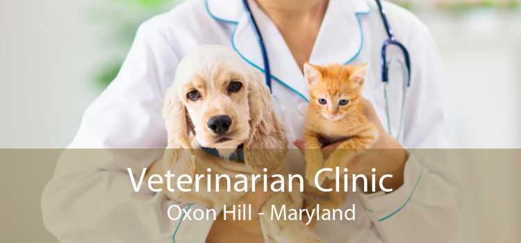 Veterinarian Clinic Oxon Hill - Maryland