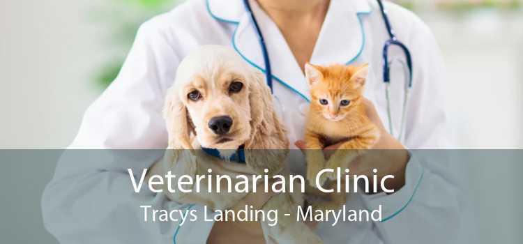 Veterinarian Clinic Tracys Landing - Maryland