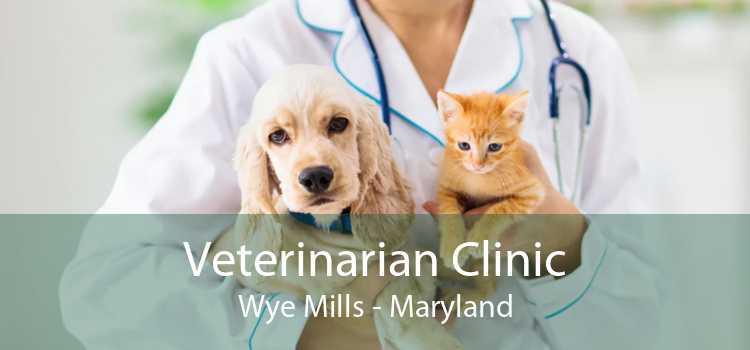 Veterinarian Clinic Wye Mills - Maryland